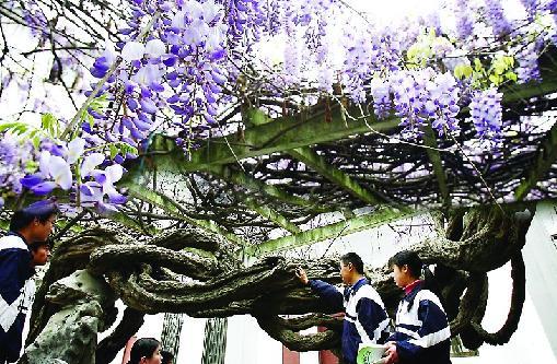 苏州市一中是一个花园式的学校,占地4.